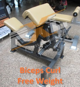 Biceps Curl Free Weight